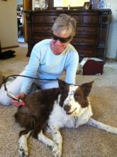 Veterinary service using laser therapy